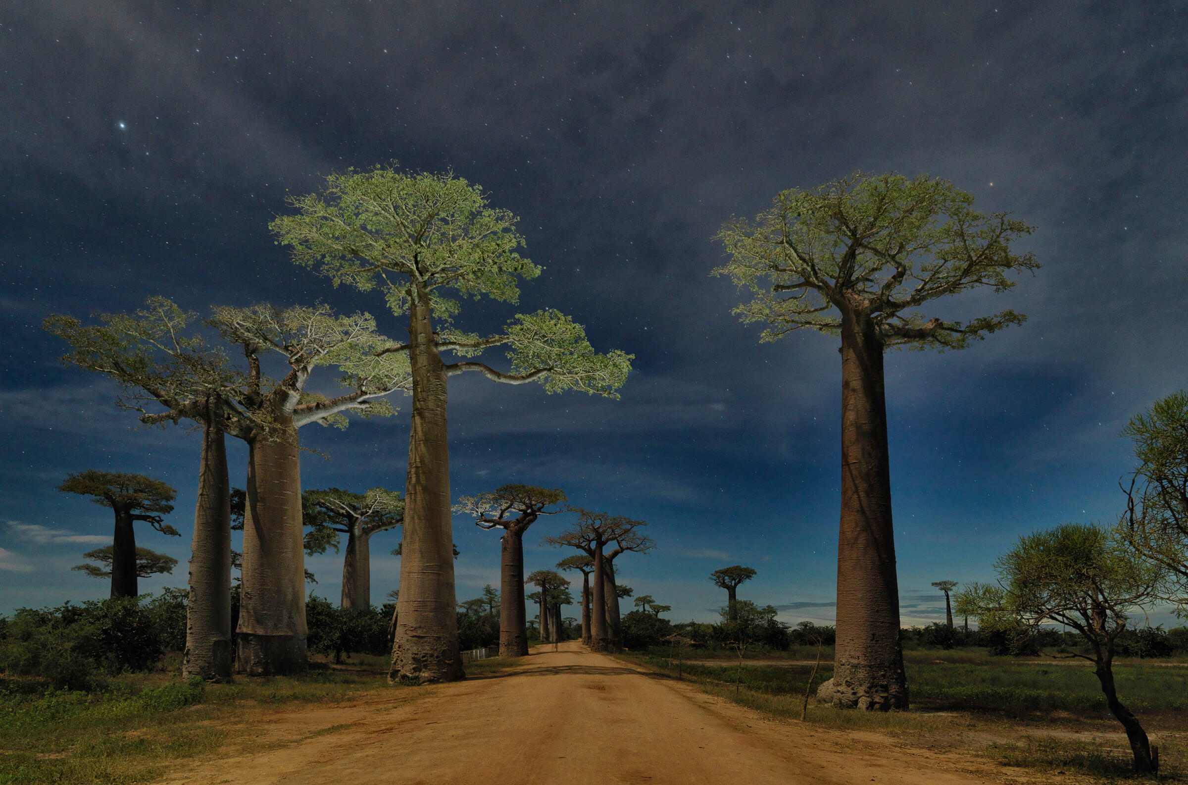 Adrian Houston london luxury photographer- RICHARD BRANSON GRANDIDIER'S BAOBAB ALLEY