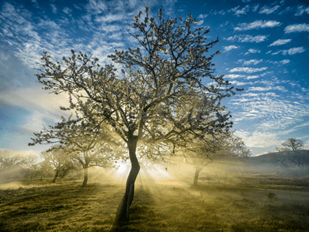Adrian Houston london luxury photographer- A Portrait of the Tree Almond Blossom Ibiza
