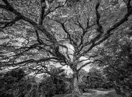Adrian Houston london luxury photographer- Miaja Gallery Exhibition A Portrait of the Tree