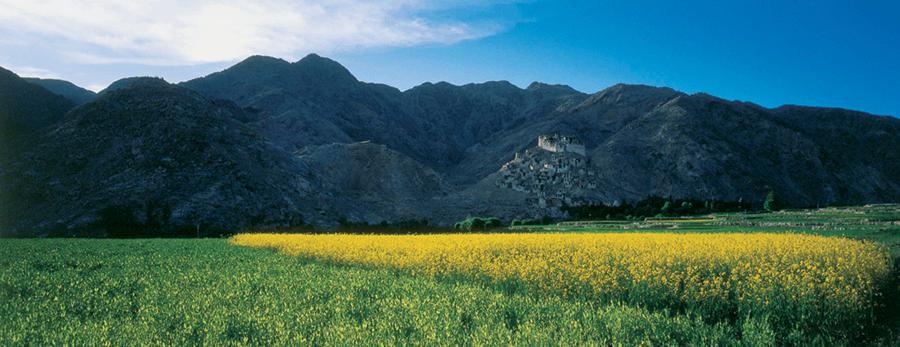 AH Ladak KS 4