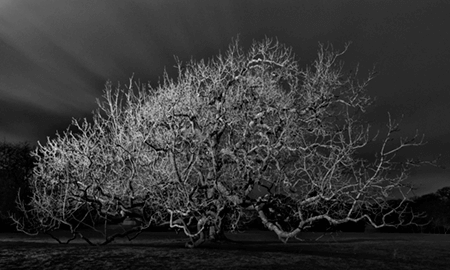 Adrian Houston london luxury photographer- A Portrait of the Tree Sir Richard Carew Pole