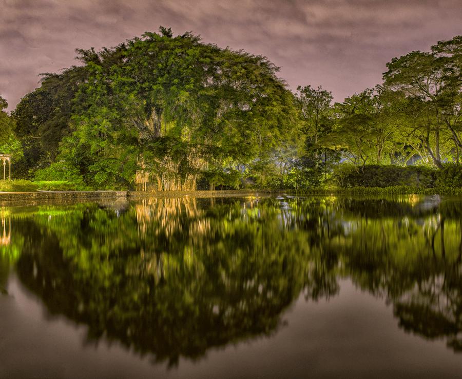 Adrain Houston Banyan Tree Botanical Gardens Miaja Gallery Singapore 5 copy