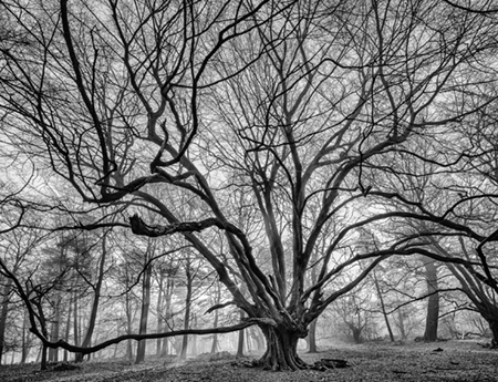 Adrian Houston london luxury photographer-A Portrait of the Tree Book Hornbeam Hatfiield Lord Valentine Cecil