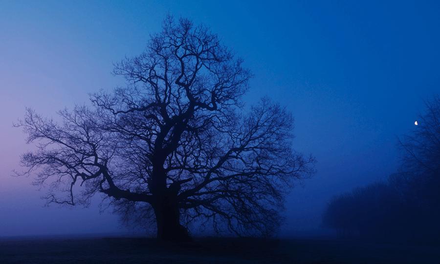 Adrian Houston london luxury photographer- Lord Salisbury, Hatfield House, Oak