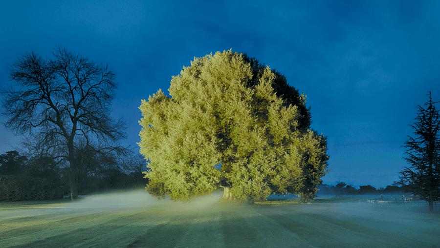 Adrian Houston london luxury photographer- Nicholas Coleridge, Wolverton Hall, Holm Oak
