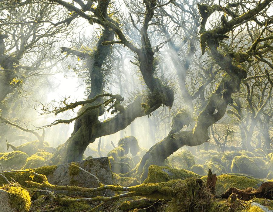 Adrian Houston london luxury photographer- Dartmoor, Oaks