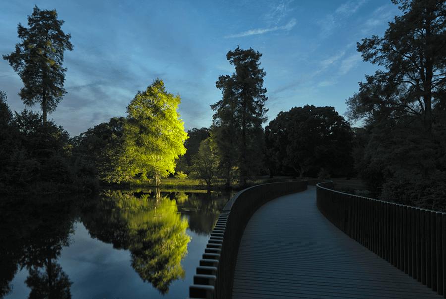 Adrian Houston london luxury photographer- Kew Gardens, The Montezuma Bald Cypress