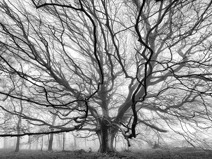 Adrian Houston london luxury photographer- Broadly Wood Beech