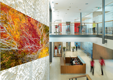Luxury Fine Photography - Fauna Mural Roche by Photographer Adrian Houston